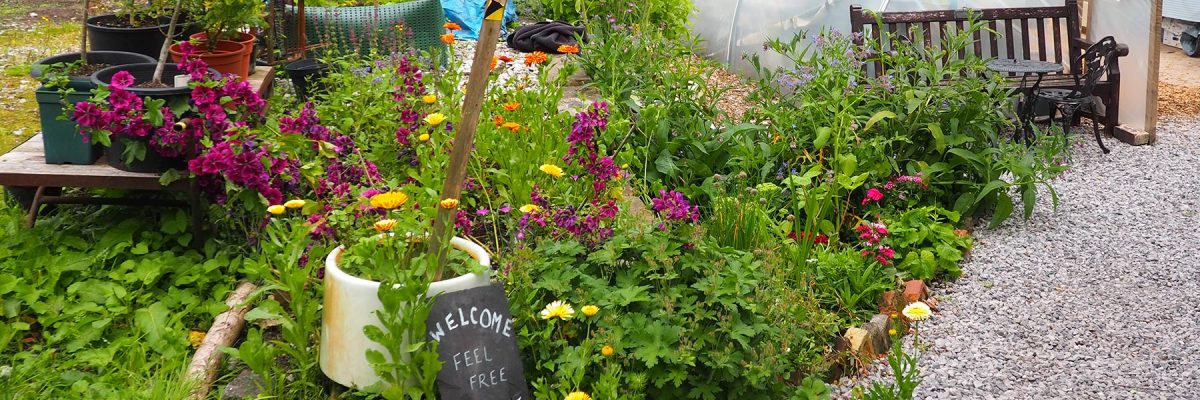 Welcome to Serpentine Community Garden online. We hope to see you in person soon.