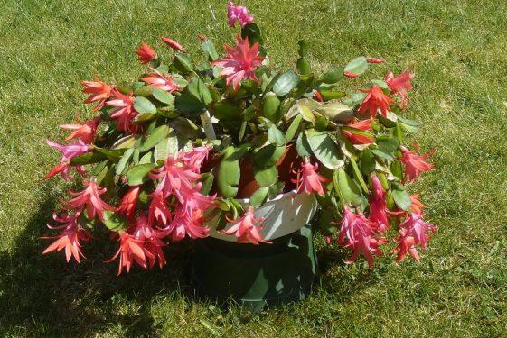 Succulents - an update