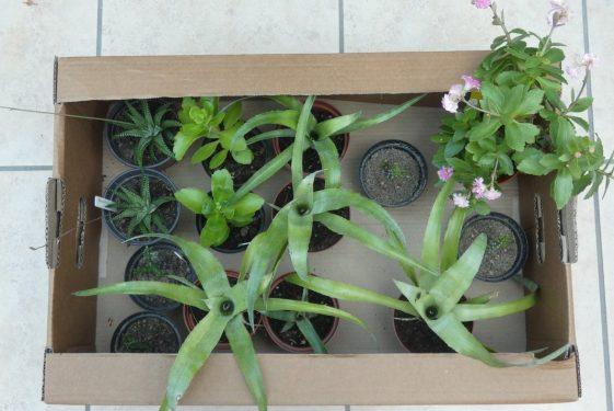 Succulents for the Fringe Secret Garden