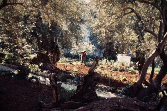 An Easter Garden