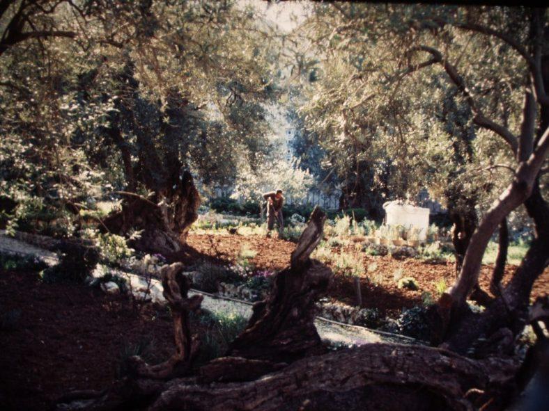gethsemane1986-p1011109_orig-1688536