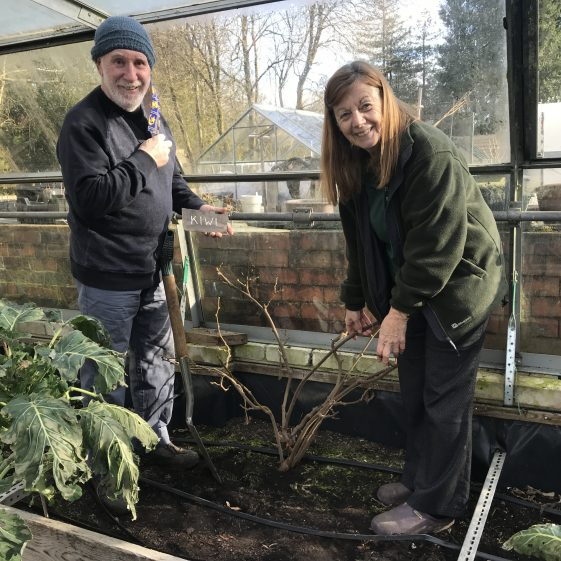 Jo and David Holdway prepare to dig up the Kiwi tree
