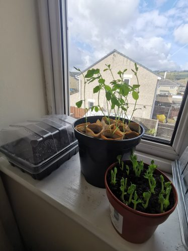 Window Sill Sowing and Growing